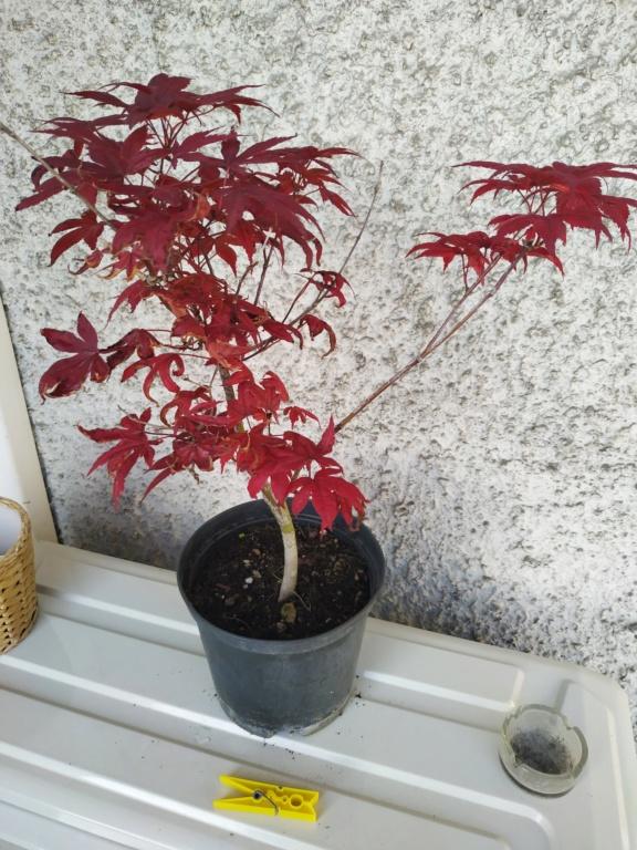 Futuri bonsai Img_2023