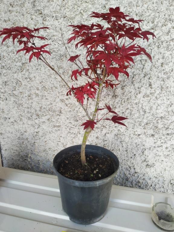 Futuri bonsai Img_2025