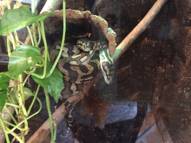 Schlangen :3 ?! Img_0410
