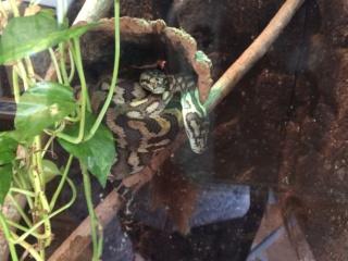 Ich suche... einen Schlangen-/Drachenavatar Img_0411