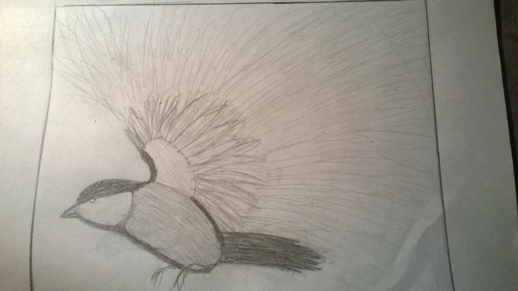 Py versucht dann auch mal zu zeichnen Wp_20110