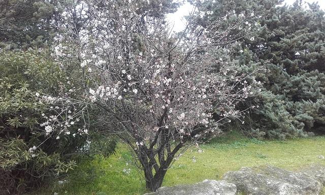 jardins (de) givrés 20190210