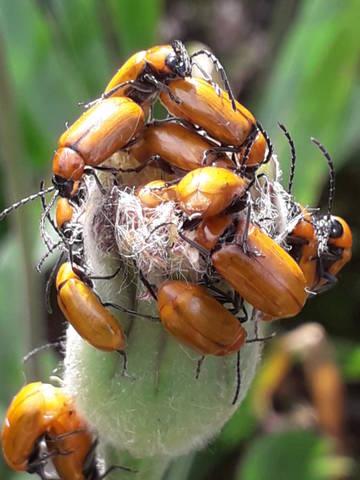 """Déficoncours """"Les insectes sur les plantes"""" - les votes 20200710"""