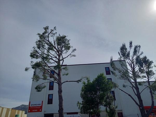 Massacre à la tronçonneuse des pins 20210518