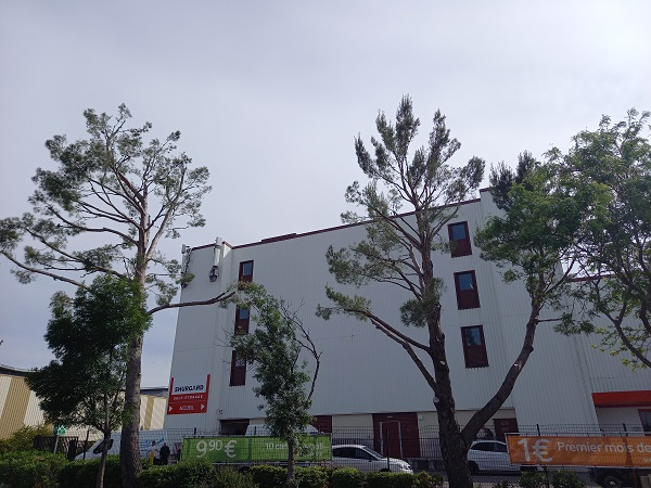Massacre à la tronçonneuse des pins 20210519