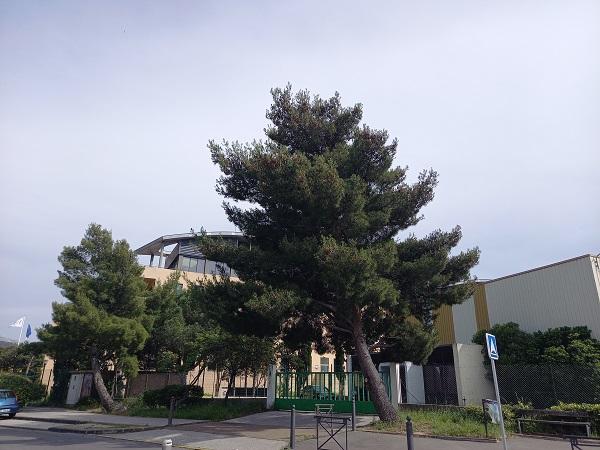 Massacre à la tronçonneuse des pins 20210520
