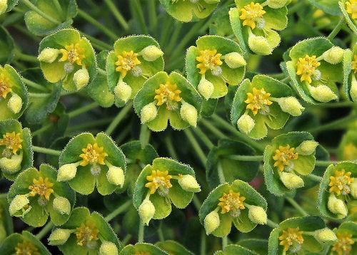 """Déficoncours """"Euphorbia"""" - les votes 41253710"""