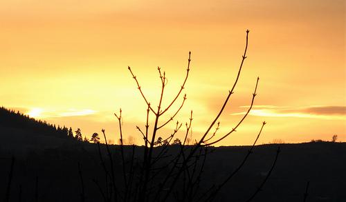 """Déficoncours """"silhouettes hivernales"""" - les votes 46516410"""