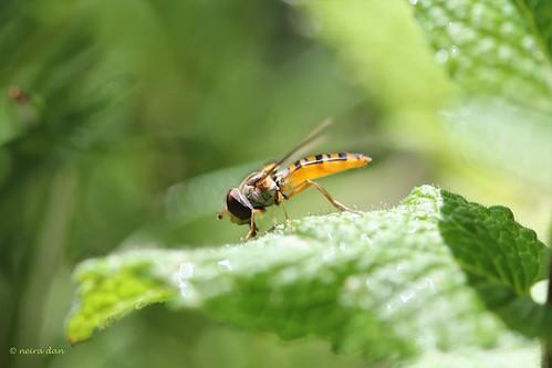 """Déficoncours """"Les insectes sur les plantes"""" - les votes 50034310"""
