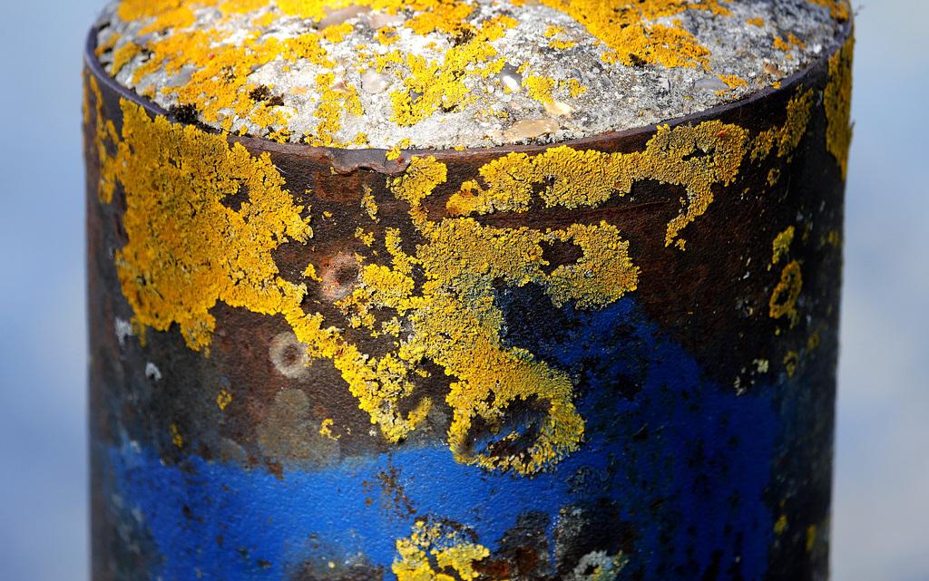 """Déficoncours """"Fantastiques lichens"""" - les votes 50331110"""