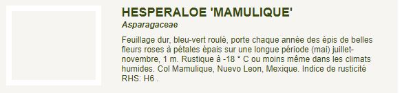 Hesperaloe 'Mamulique' Captur22