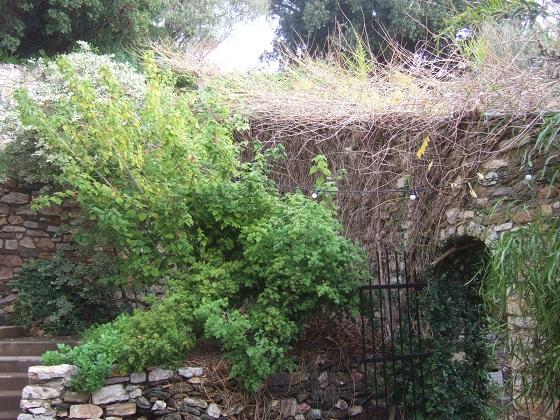 (83) Parc Saint-Bernard et Villa Noailles - Hyères - Page 7 Dscf0335