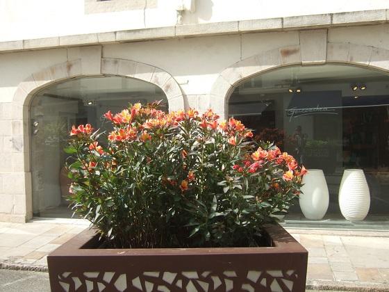 Alstroemeria ' Indian Summer' Dscf0563