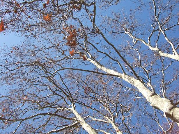 Nos arbres en hiver 2018 Dscf1023
