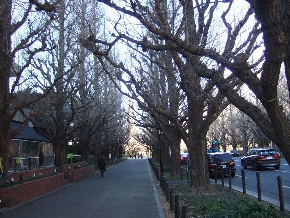 Ginkgo biloba - arbre aux quarante écus - Page 5 Dscf1032