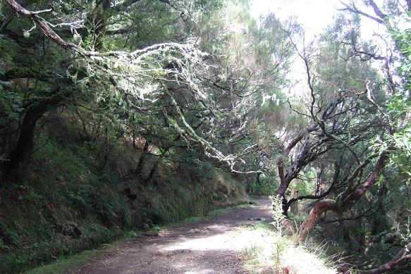 Erica arborea Dscf1051