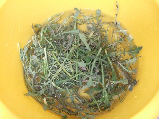 Reichardia picroides - cousteline, reichardie faux picris Dscf1688