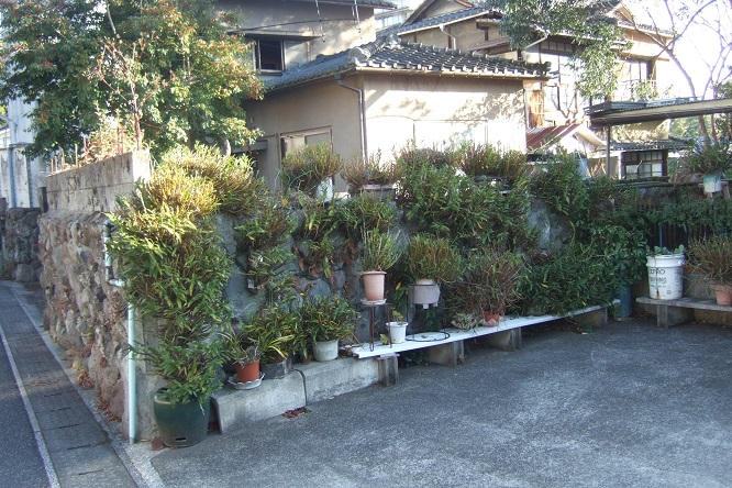 Japon Dscf1715