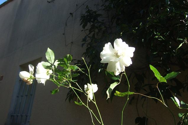 jardins (de) givrés Dscf1937