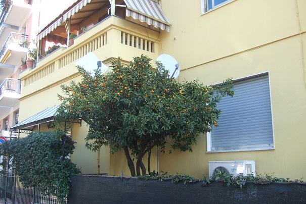 Citrus japonica - kumquat Dscf1952