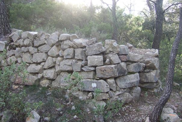 Juniperus oxycedrus - cade Dscf2910