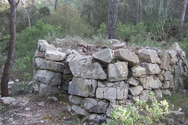 Juniperus oxycedrus - cade Dscf2911