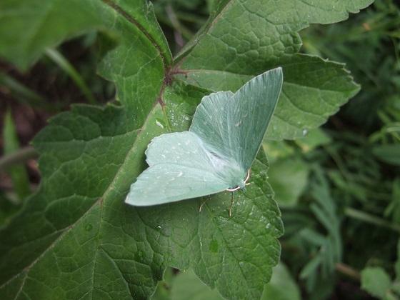fil(et) à papillons - Page 17 Dscf2953