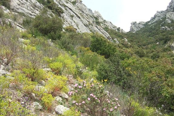 Euphorbia segetalis subsp. segetalis Dscf3624