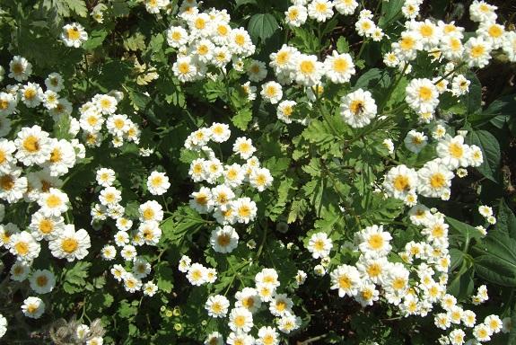 mayflower - Page 2 Dscf3712