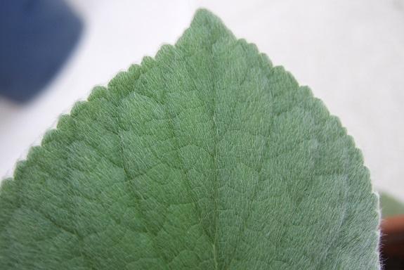 3 feuilles à deviner Dscf4039