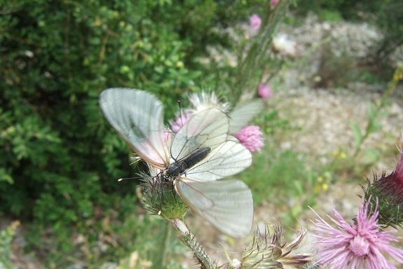 fil(et) à papillons - Page 16 Dscf4125