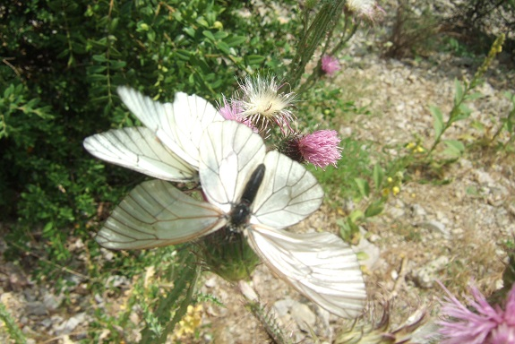 fil(et) à papillons - Page 16 Dscf4126