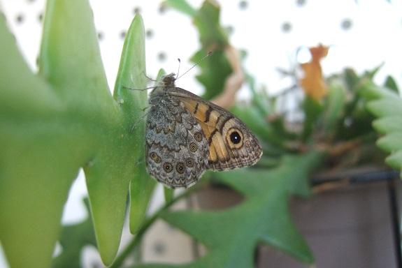 fil(et) à papillons - Page 15 Dscf4210