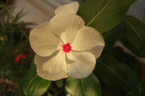 chaleureuses floraisons Dscf4230