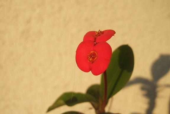 chaleureuses floraisons Dscf4315