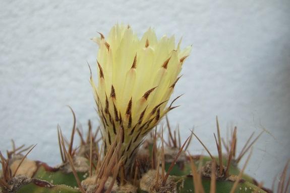 chaleureuses floraisons Dscf4811