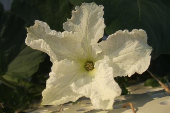 chaleureuses floraisons - Page 2 Dscf4929