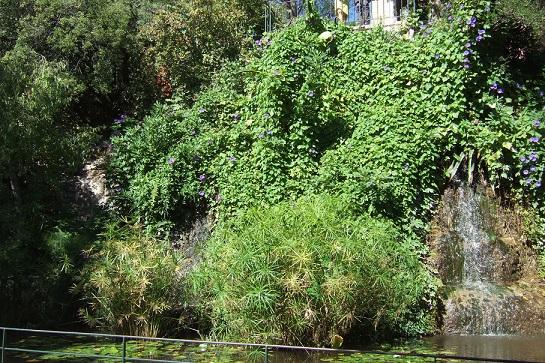Jardins de la Fontaine  - Nîmes  (30) Dscf5734