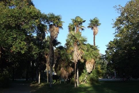 Les palmiers du Parc Borely à Marseille Dscf6237