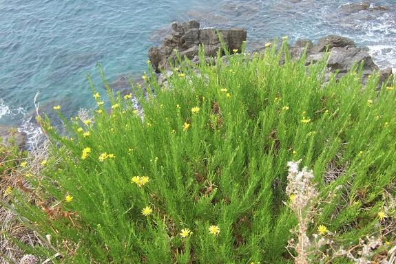 Italie - flore de Sicile - Page 2 Dscf6827