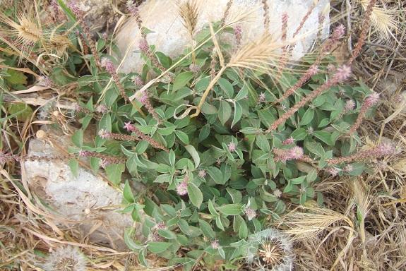 Italie - flore de Sicile - Page 2 Dscf6913