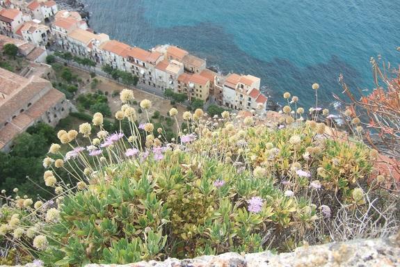 Italie - flore de Sicile - Page 2 Dscf6918