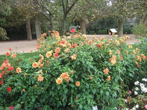 (75) Jardin des plantes - Paris - Page 2 Dscf6973