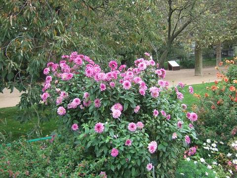 (75) Jardin des plantes - Paris - Page 2 Dscf6974