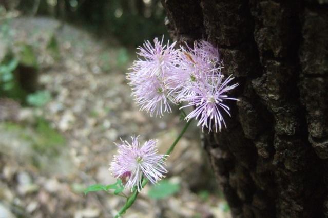 Italie - flore de Sicile - Page 3 Dscf7212