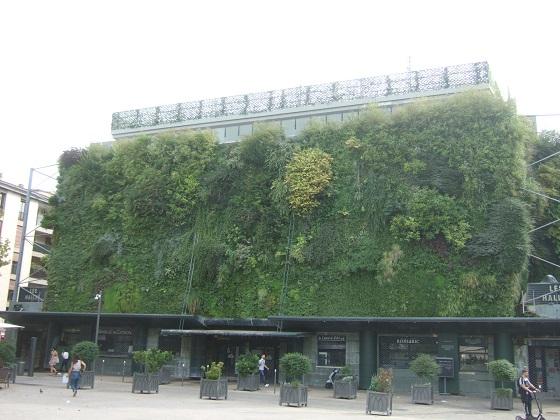 murs végétalisés extérieurs  - Page 3 Dscf7387
