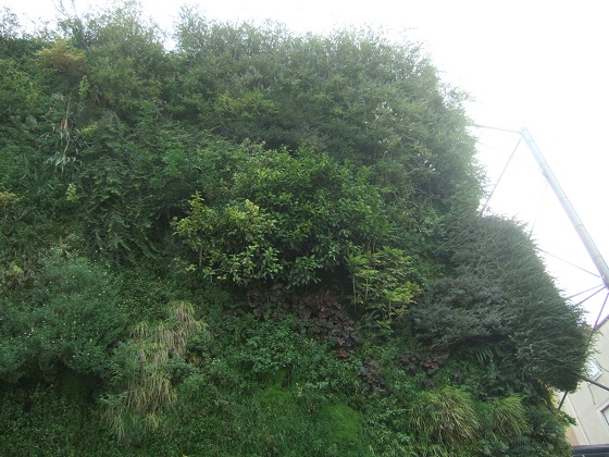 murs végétalisés extérieurs  - Page 3 Dscf7388