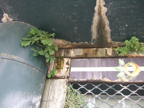murs végétalisés extérieurs  - Page 3 Dscf7393