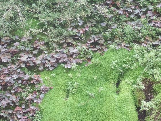 murs végétalisés extérieurs  - Page 3 Dscf7395