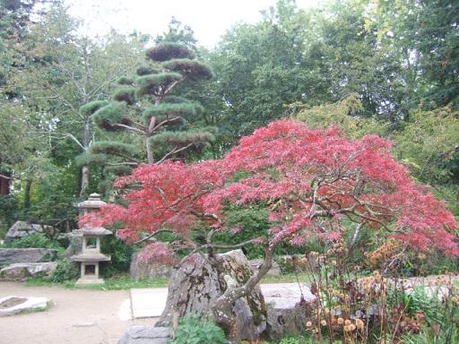 (44) Jardin japonais de l'île de Versailles - Nantes  Dscf7445